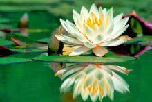 Lotus Olistica centro di ricerca olistica bio-naturale (associazione di promozione sociale)