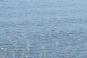 iNLP Center Italy