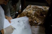 Esercitazione Pratica e compilazione delle schede sugli scheletri della necropoli di Nuceria