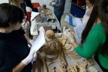 Esercitazione Pratica sugli scheletri della necropoli di Nuceria