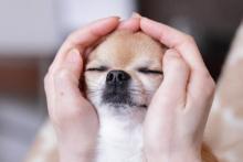 Anche i nostri amici animali possono essere trattati con il Reiki, ottenendo in certi casi dei buoni risultati per il loro benessere.