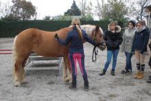 Un momento di esercitazione pratica col cavallo